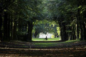 Fietser in het bos (zelfde locatie als de winnende foto)